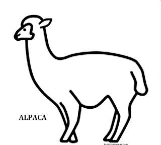 fauna chilena dibujos