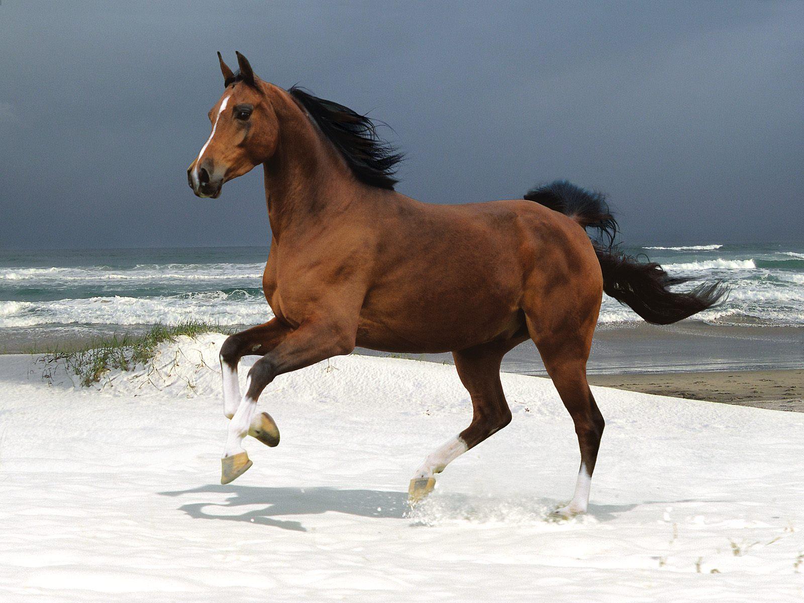 Wonderful   Wallpaper Horse Pinterest - The-best-top-desktop-horse-wallpapers-37  Best Photo Reference_132674.jpg