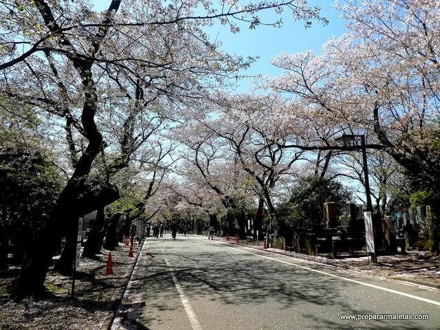 cementerio de yanaka en tokio