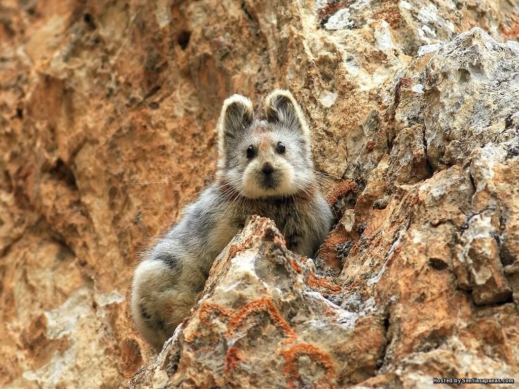 Arnab Ajaib Berwajah Beruang Di Pergunungan China