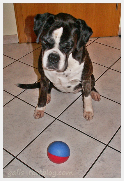 Boxer Ivy mit dem TRIXIE Activity Snack-Ball