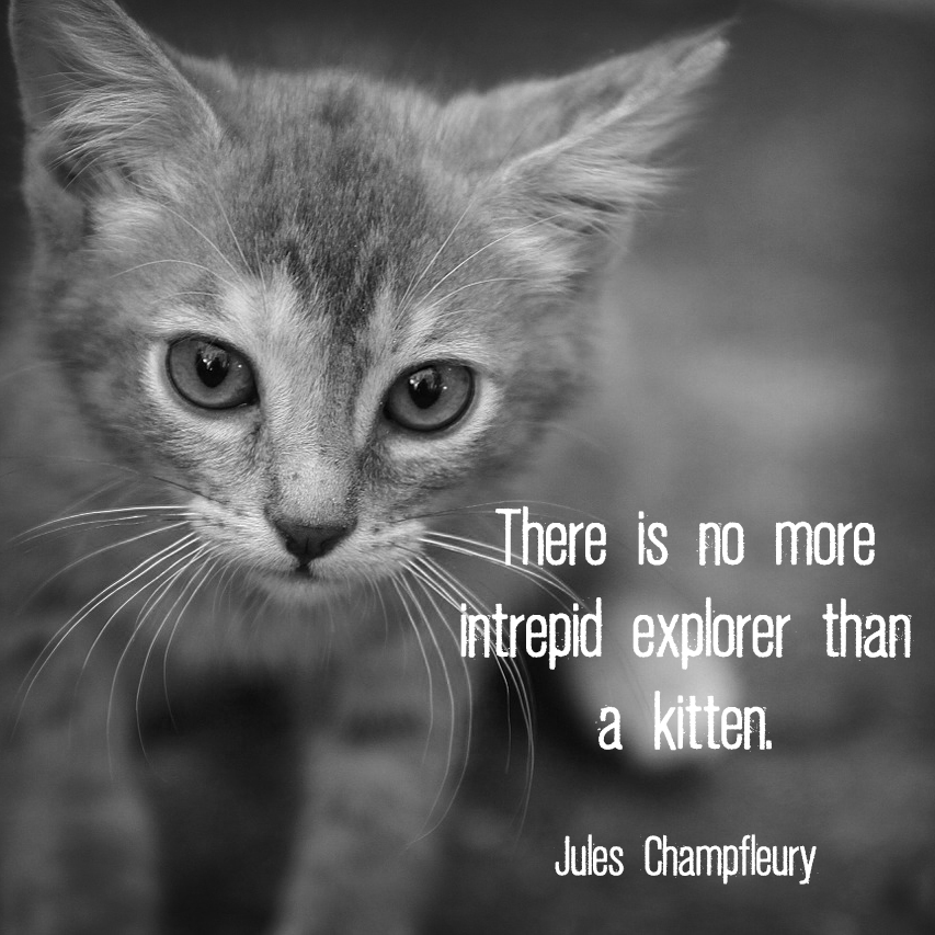 "Small prowling kitten with quote ""There is no more intrepid explorer than a kitten"". - Jules Champfleury"