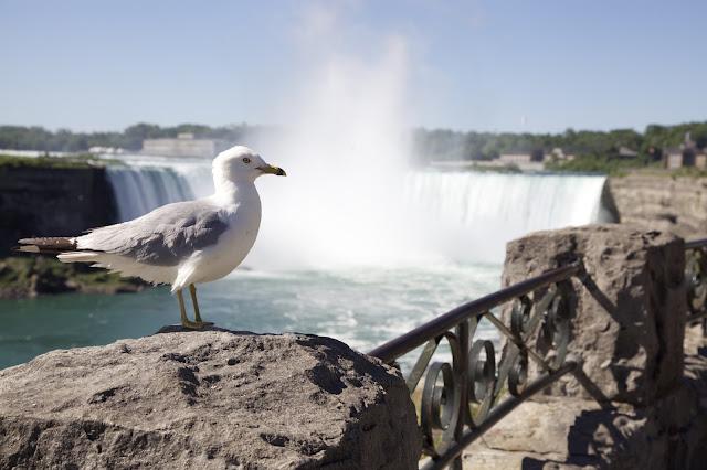 Niagara Falls , Canadian Side