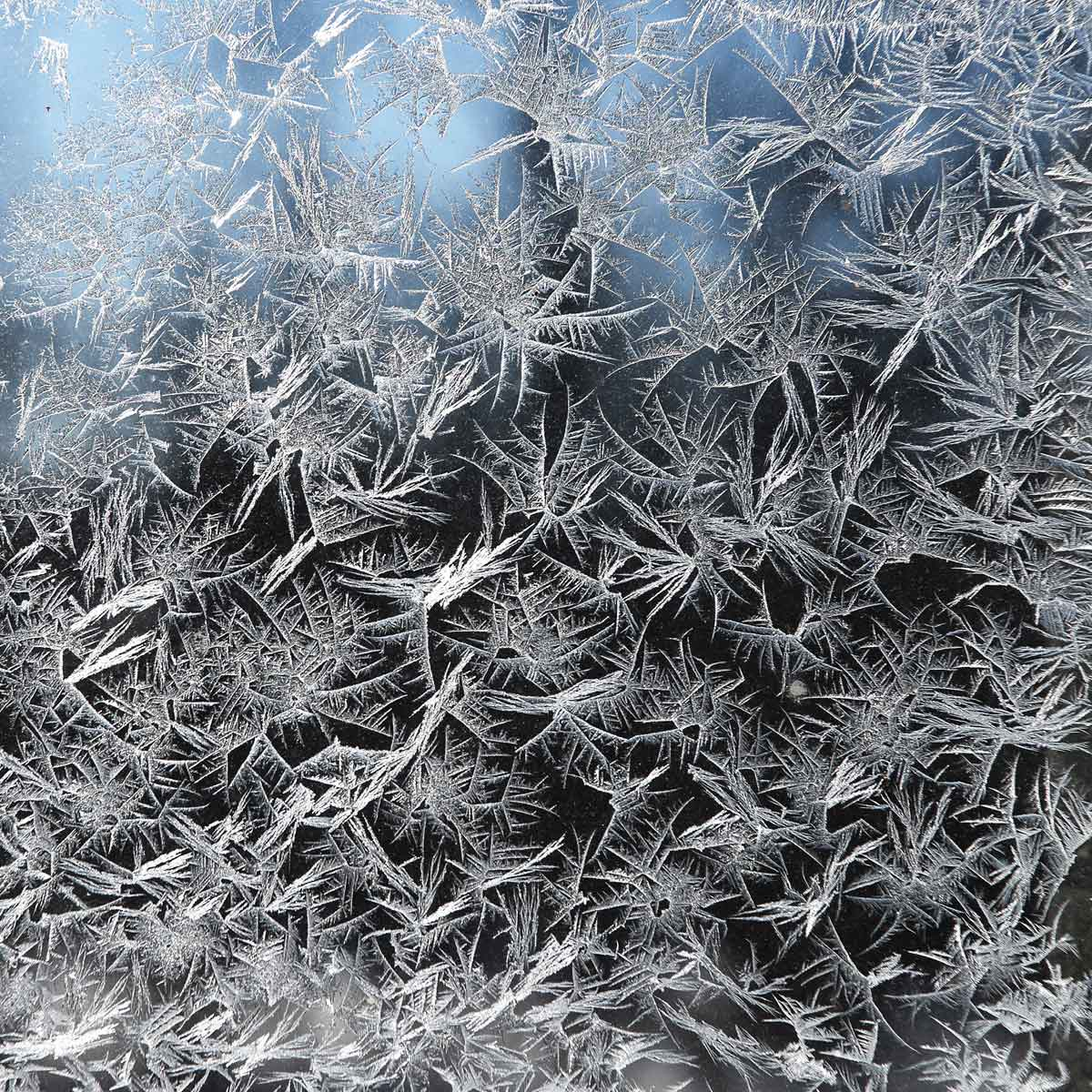 Frost from Polar Vortex by Jeanne Selep