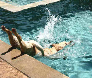Dog flops before he flips