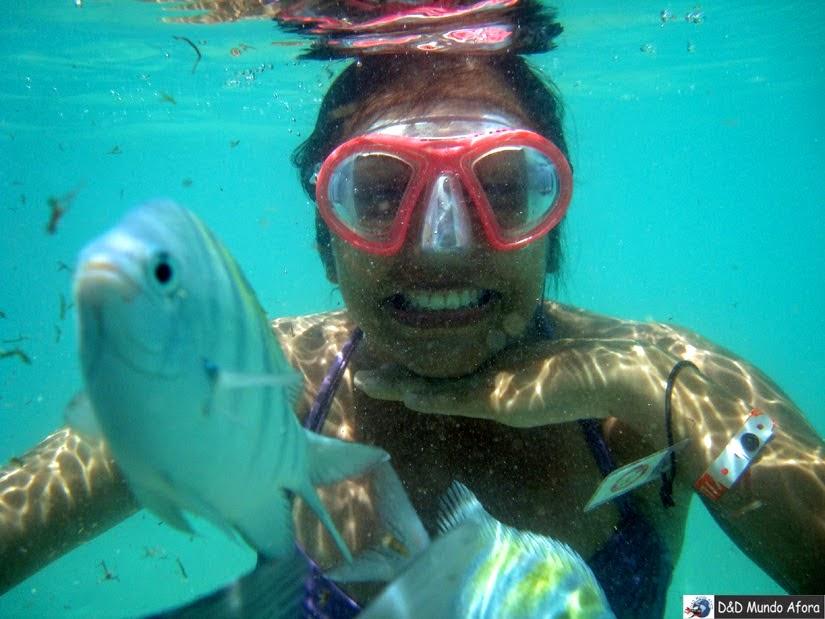 Snorkel Piscina naturais de Maragogi Alagoas