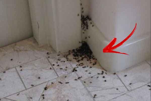 eliminare furnici din casa