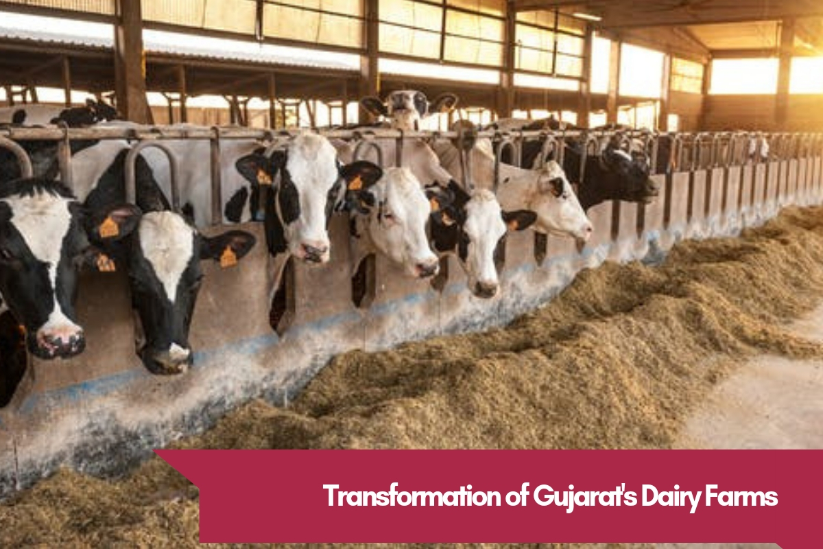 The Truth about Unparalleled Success of Gujarat's Dairy Farms