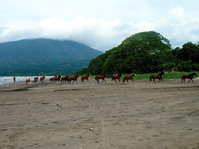Horses on Santa Domingo beach, Ometepe Island, Nicaragua