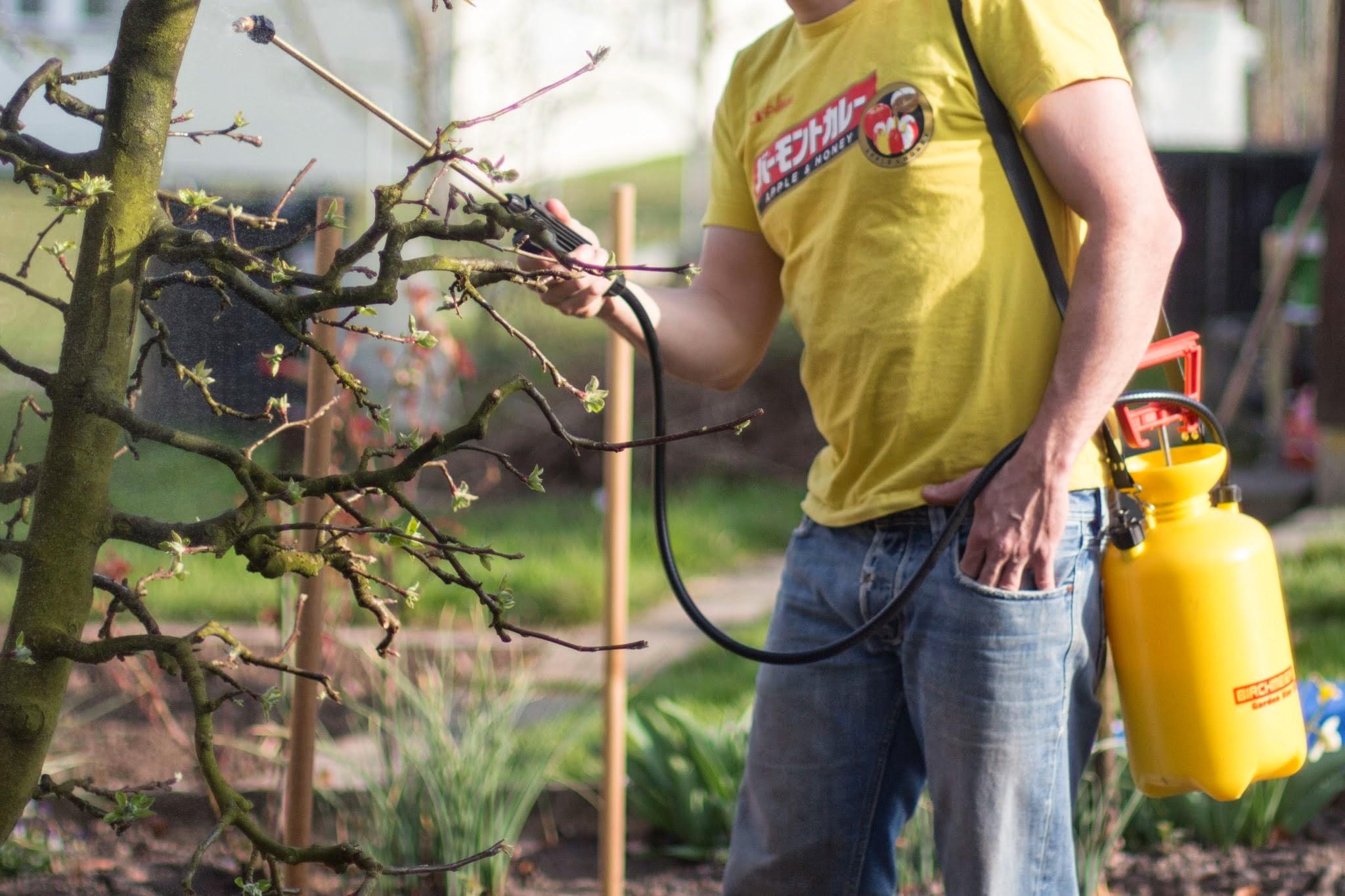 pflaumenbaum schneiden herbst