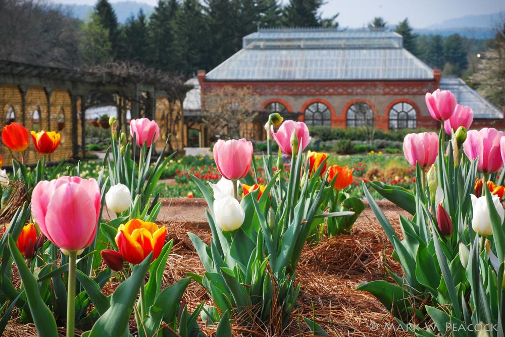 Appalachian Treks: Biltmore Gardens
