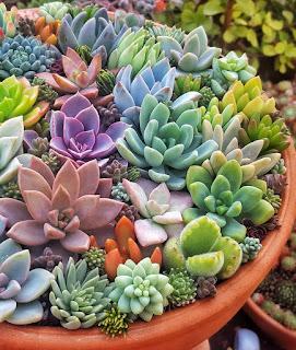 An arrangement of colourful succulents in terracotta pot