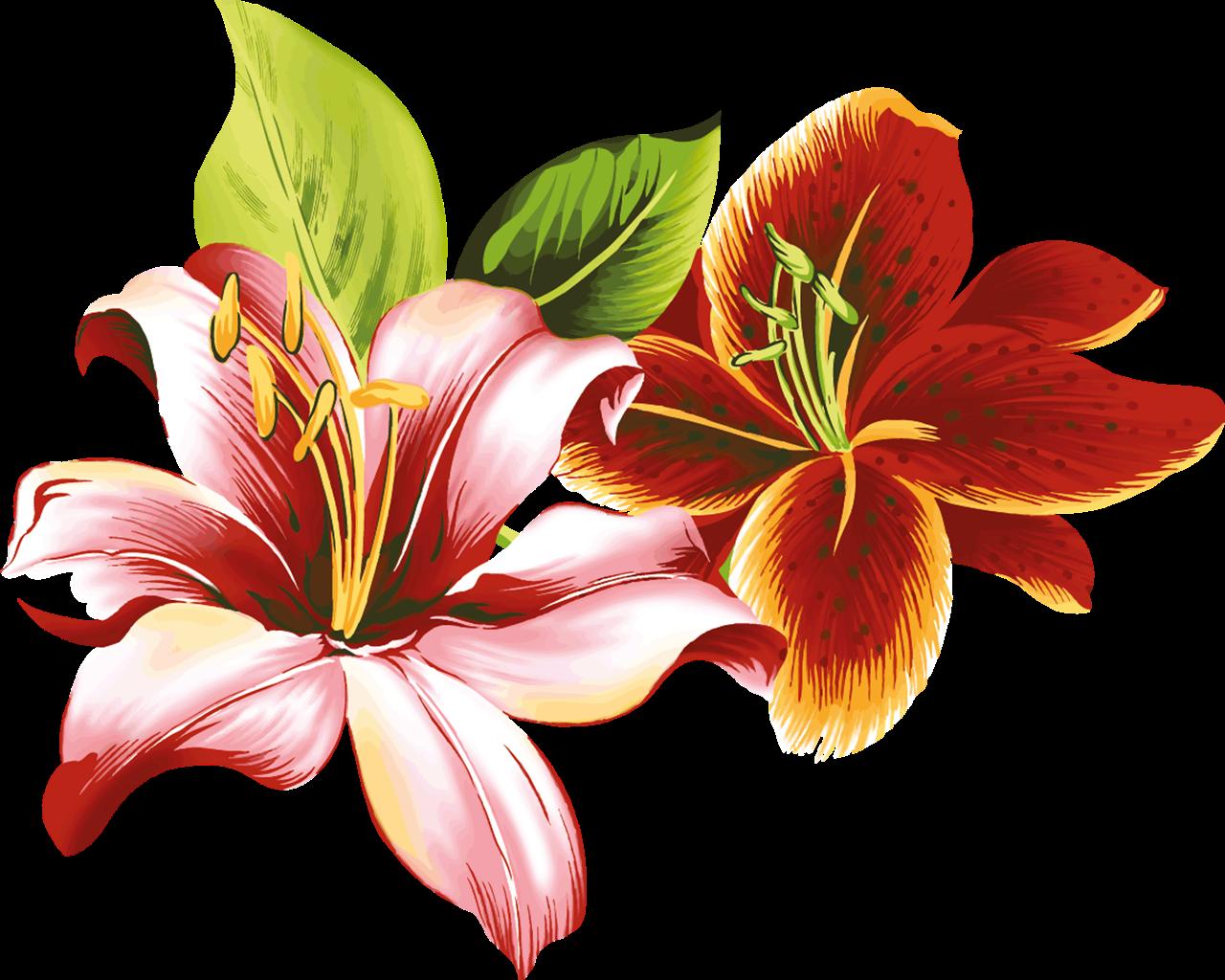Flores vectoriales con fondo transparente png arte digital - Marcos para laminas grandes ...