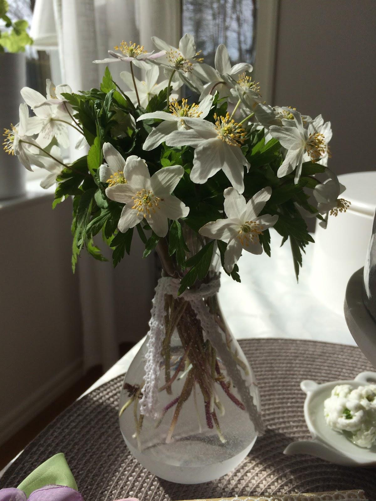 Draganasgarden: Bijele Anemone iz prirodnog rezervata - Trka ili ne pred poro...