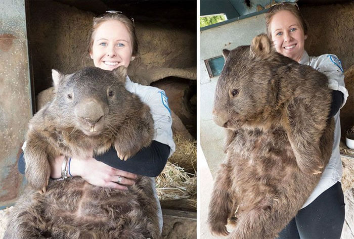 32 Incredible Photos Prove That Size Can Be Confusing Sometimes