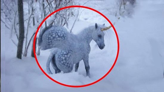 Unicorns ( Tek Boynuzlu At )
