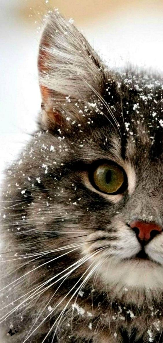 Beautiful winter scene with cat whiskers in snow