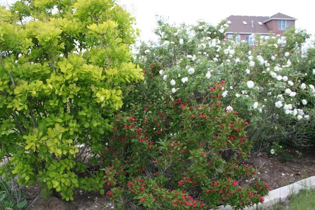 Garden Musings May 2011