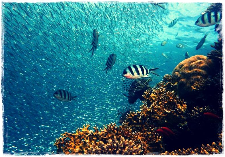 ciri-ciri ikan