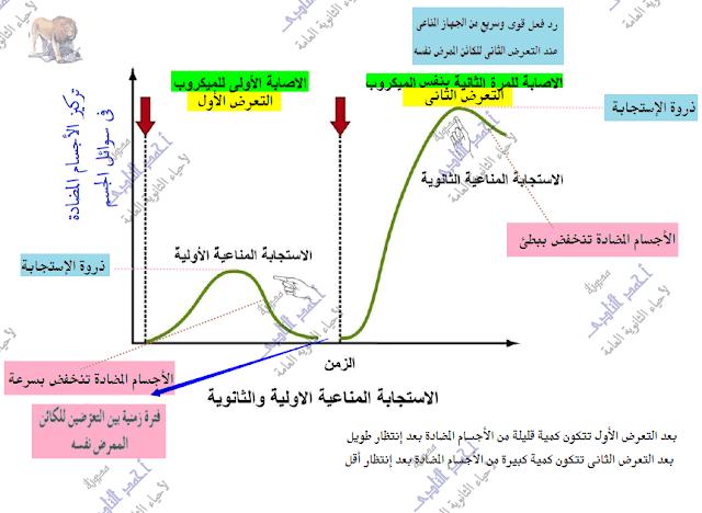 خلايا الذاكرة البائية والتائية - مراحل الإستجابة المناعية - الإستجابة المناعية الأولية - الإستجابة المناعية الثانوية
