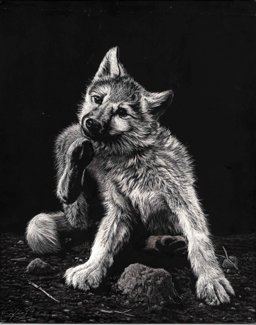 04-Wolf-Puppy-Allan-Ace-Adams-Scratchboard-Drawings-of-Wild-Animals-www-designstack-co