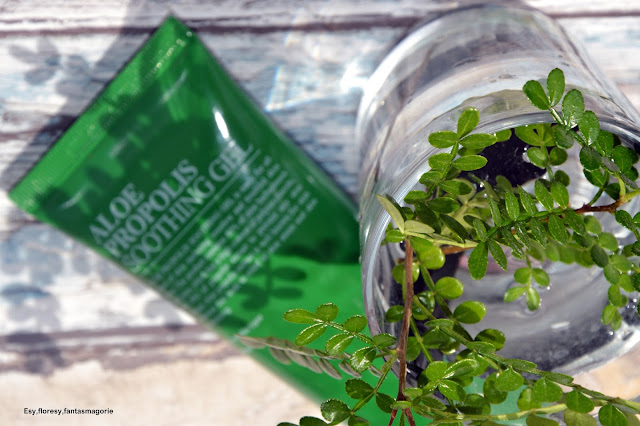 Aloes i propolis na 6 sposobów