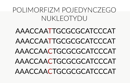 polimorfizm DNA