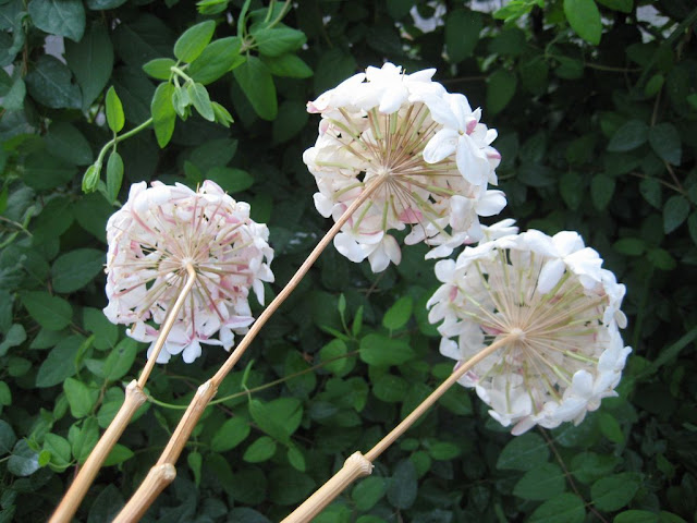biznaga-Malaga´s-handcrafted-flower