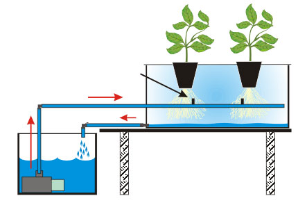 6 teknik budidaya hidroponik sederhana rumah dan kebun