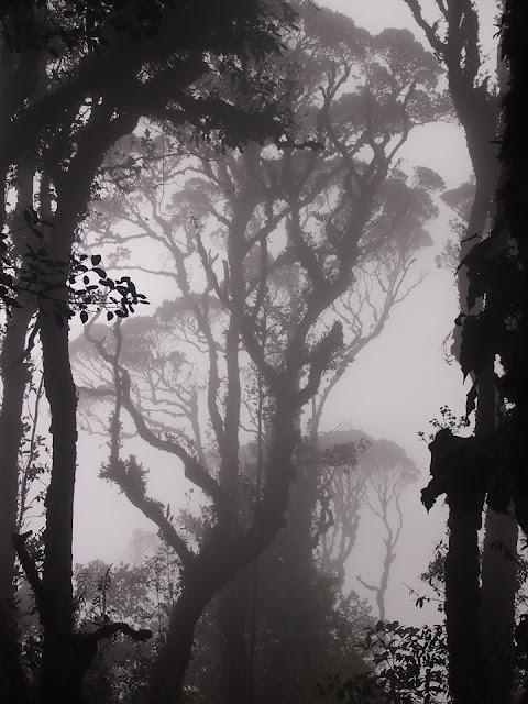 hutan lumut