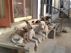 populasi anjing