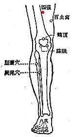 四強穴位 | 四強穴痛位置 - 穴道按摩經絡圖解 | Source:zhongyibaike.com