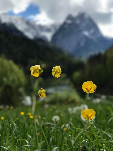 Trauung auf der Bergwiese, Hochzeit, Instagram und Social Media, heiraten in Garmisch, Riessersee Hotel, Bayern, Berghochzeit, Natur, See, Mai