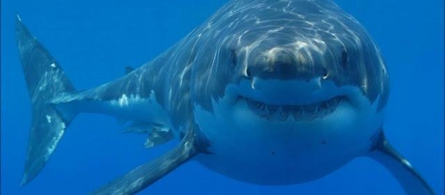 Έπιασαν καρχαρία με το καλάμι - Αυτό που ακολούθησε όμως δεν μπορούσαν να το προβλέψουν (βίντεο)