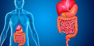 Función aparato digestivo
