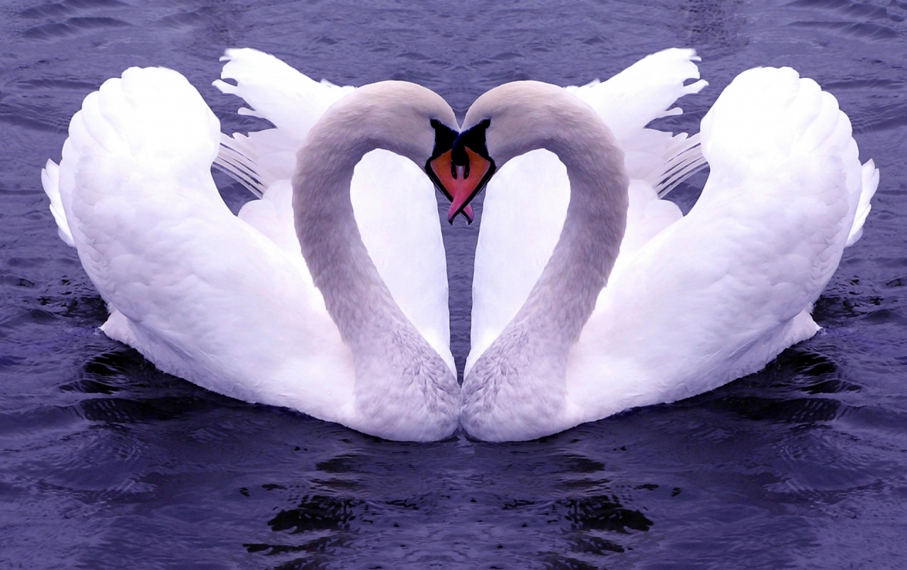 Wallpapers Love Birds: The Fashion Time: Love Birds Couple Wallpapers