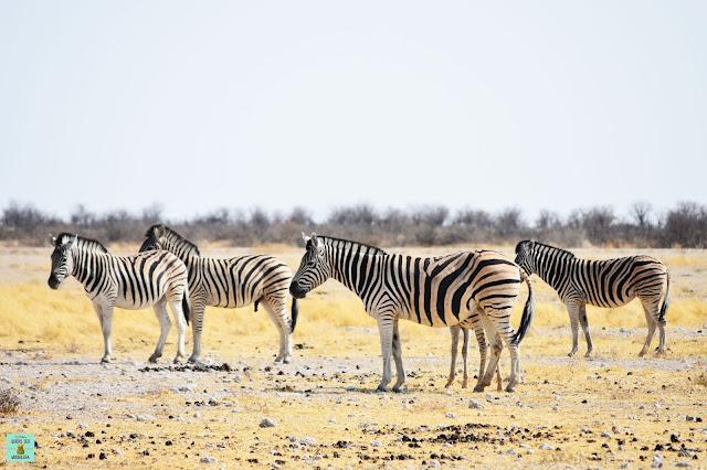 Cebras en Parque Nacional de Etosha, Namibia
