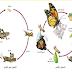 الصف الخامس - الفصل الأول - دورة الحياة