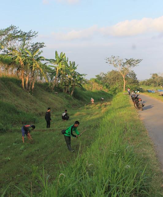 Penanaman jambu mete di DAS Lodoyo - Tulungagung
