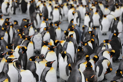 Emperor Penguins thinking about getting organized. Source: Martin Wettstein on Unsplash - https://unsplash.com/photos/4CVMWrWh3xU