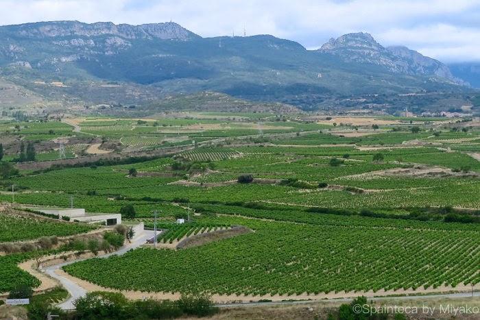BODEGA CONTADOR カンタブリア山脈と葡萄畑に囲まれたボデガ・コンタドール