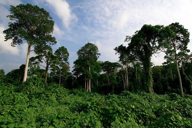 Inilah Taman Nasional Bukit Barisan Selatan Yang Sangat Kaya Flora Dan Fauna, Silahkan Share..!!