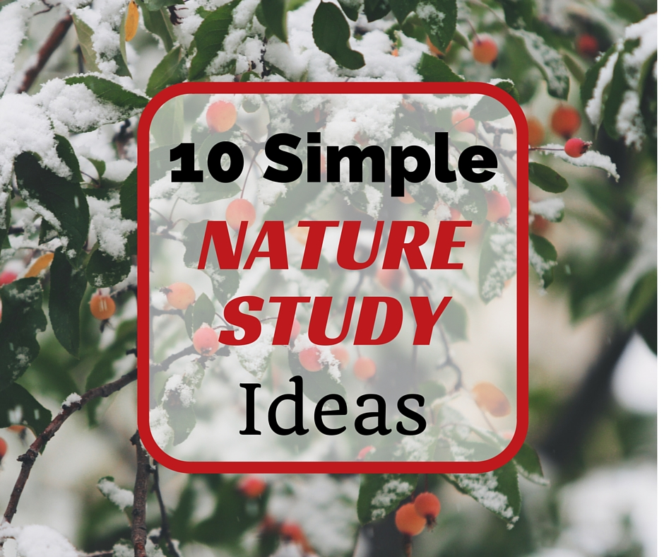 10 simple winter nature study ideas