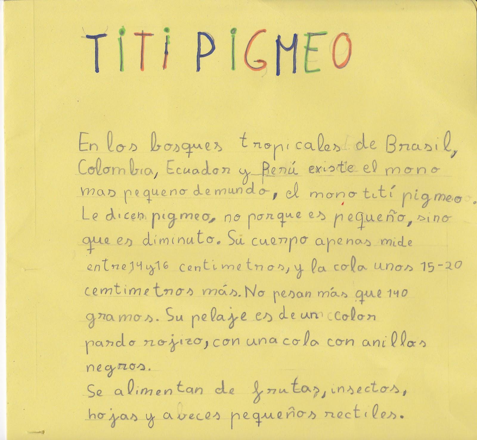 Ceip El Zargal Second Grade Titi Pigmeo Carmen
