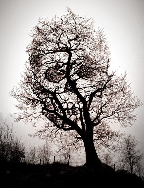Tree Optical Illusions