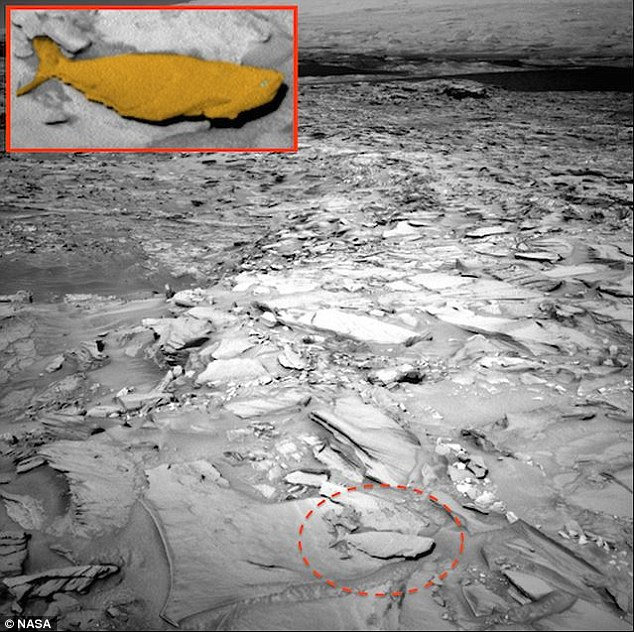 Shark on Mars