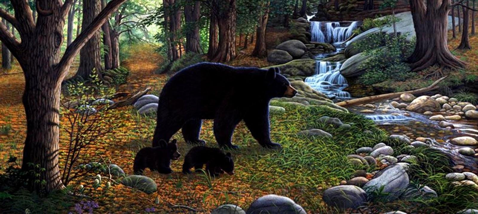 black bear wallpaper wallpapers