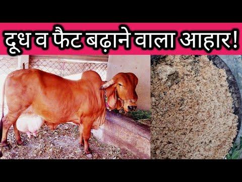 गाय भैस के दूध का फैट कैसे बढ़ाएं - Gaay aur Bhais ka dudh fat badhane ka tarika upay