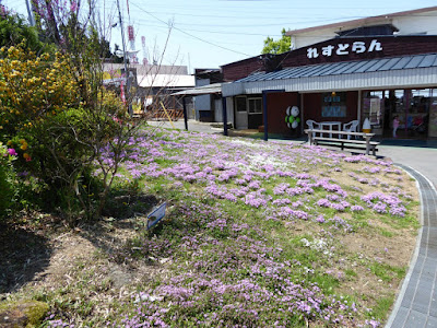 生駒山上遊園地 れすとらん シバザクラ