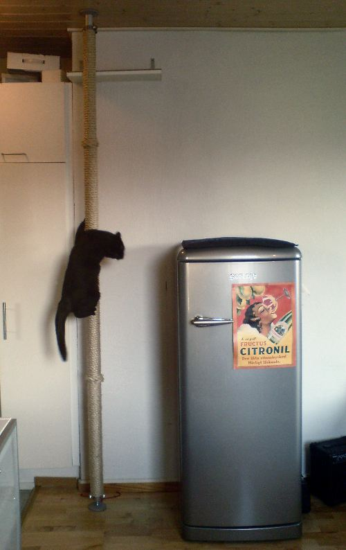 Minimalistic Floor To Ceiling Climbing Post For Cats